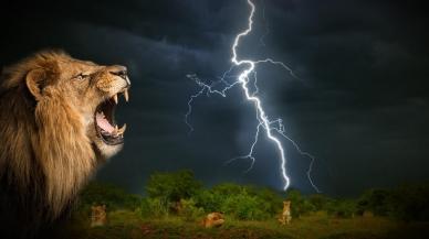 L'orage Félin