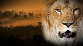 GANG DE LIONS