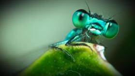 INCROYABLES INSECTES