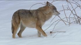 Destination Wild : Russie, Sibérie