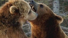 ANIMAL FIGHT CLUB: TOUT POUR LE VAINQUEUR